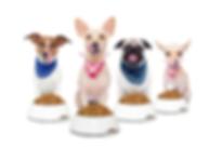 Centro de Mascotas Catadoras