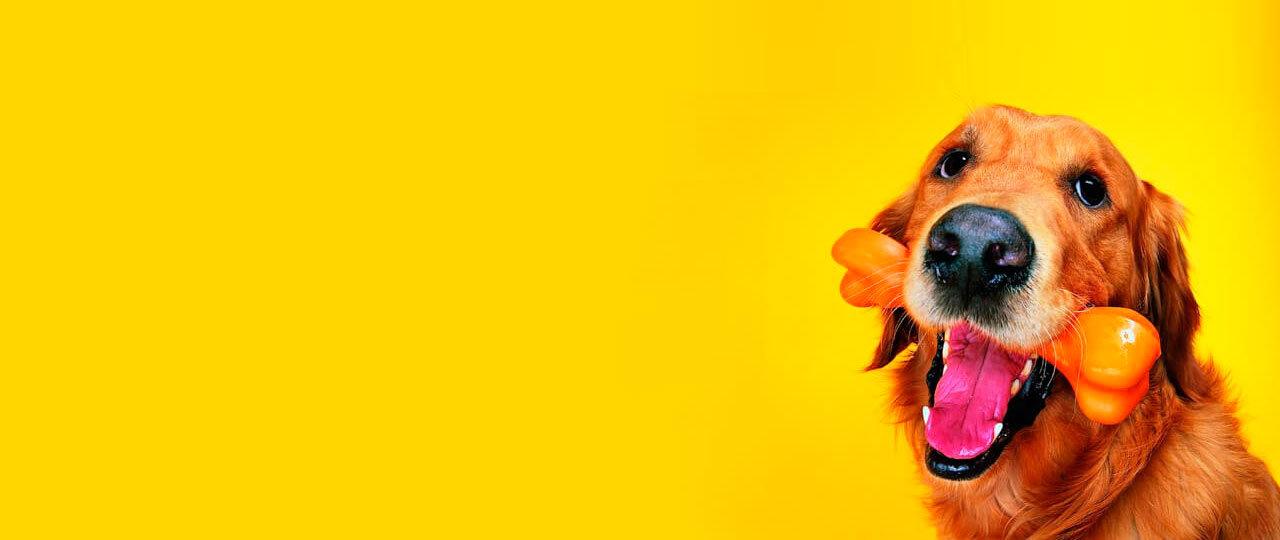 Saborizantes Alimentos, Perros y Gatos