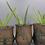 Thumbnail: Re'lar Planter