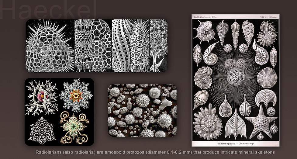 Haeckel.jpg