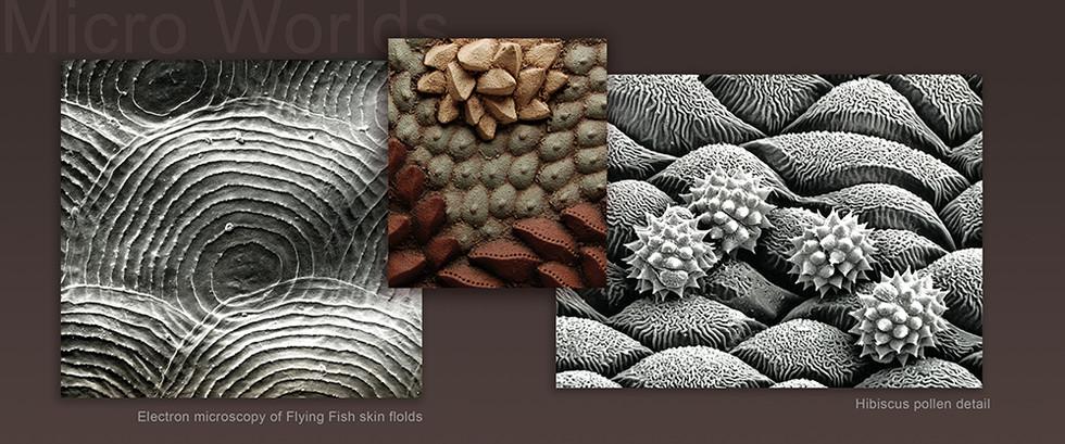 Microscopy.jpg