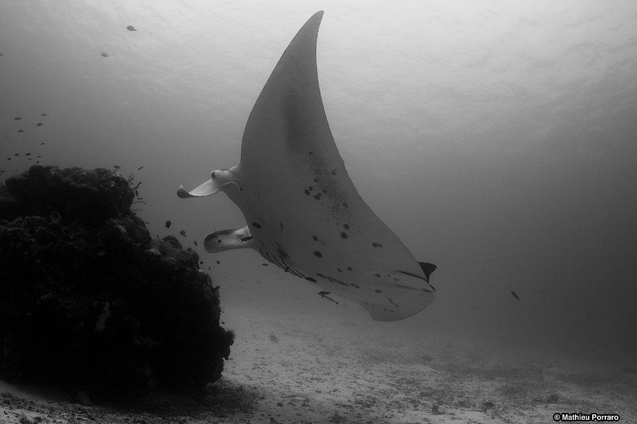 Technical Diving, Gozo, Mathieu Porraro, Technical diving courses Gozo, TDI, SDI, PADI, Technical diving instructor