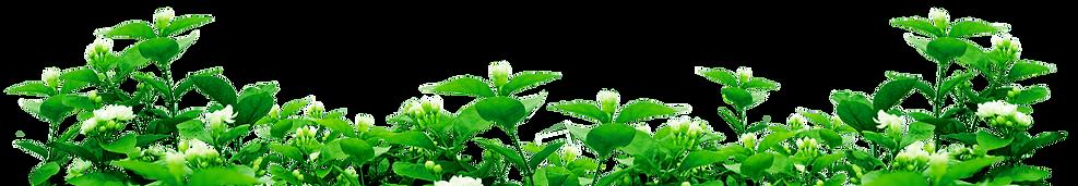 green_leaf.png