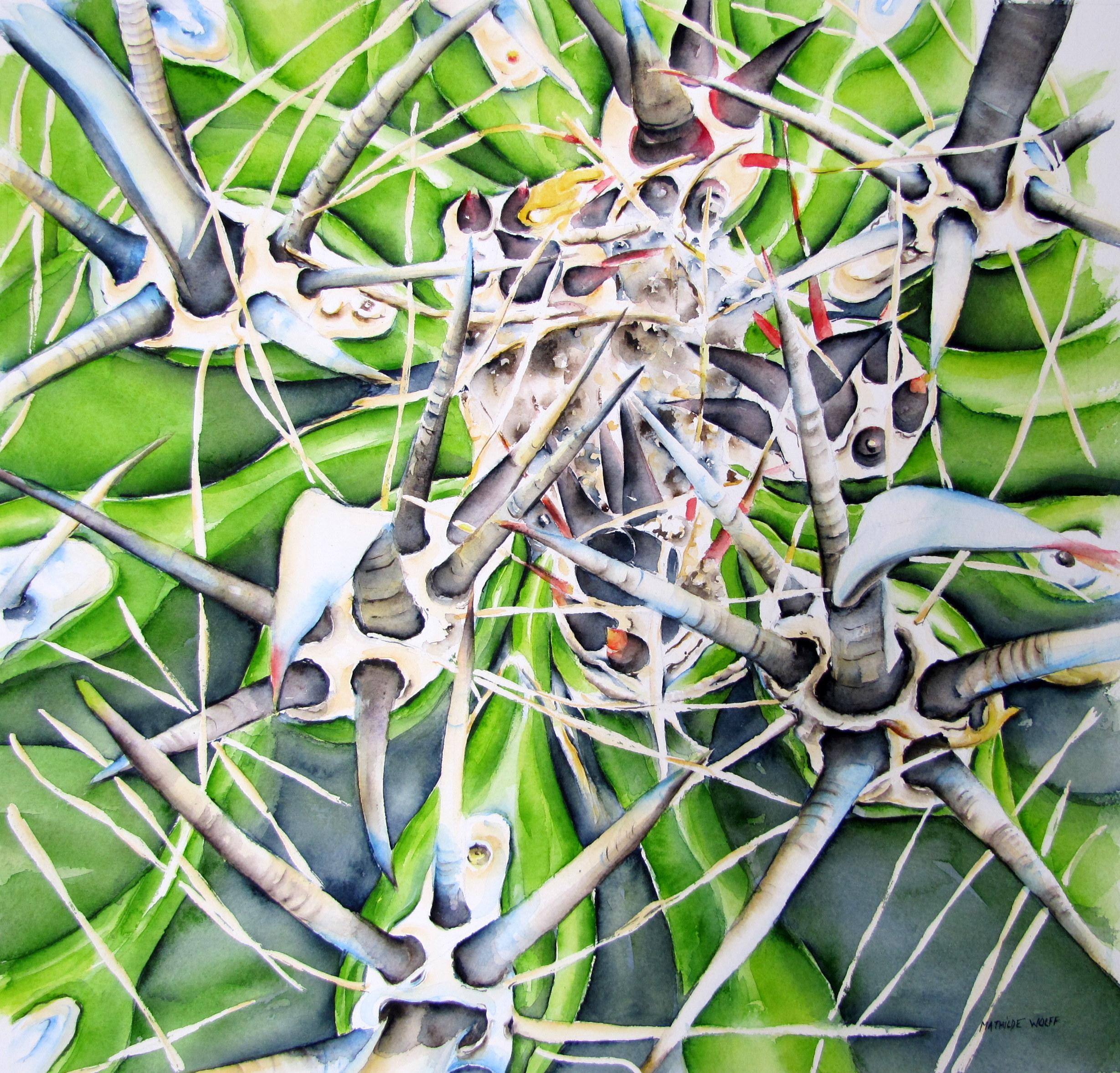 Cactus 50x50 cm