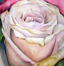 Rose 50x50 cm