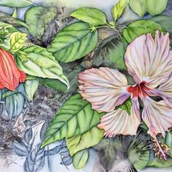 Hibiscus - Ilha Grande