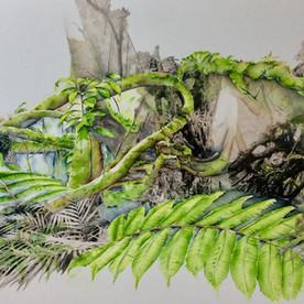 Cloud forest Mombacho Nicaragua 3