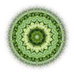 mandala-green_art.jpg