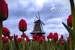 8D Tulips of Northern Holland  |from April-May 2021 | Free Upgrade to Suite