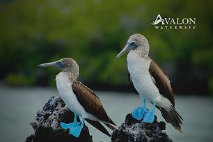 15D Discover Galapagos & Peru | Selected May, Jun Sep & Nov 2021 | SAVE RM2000