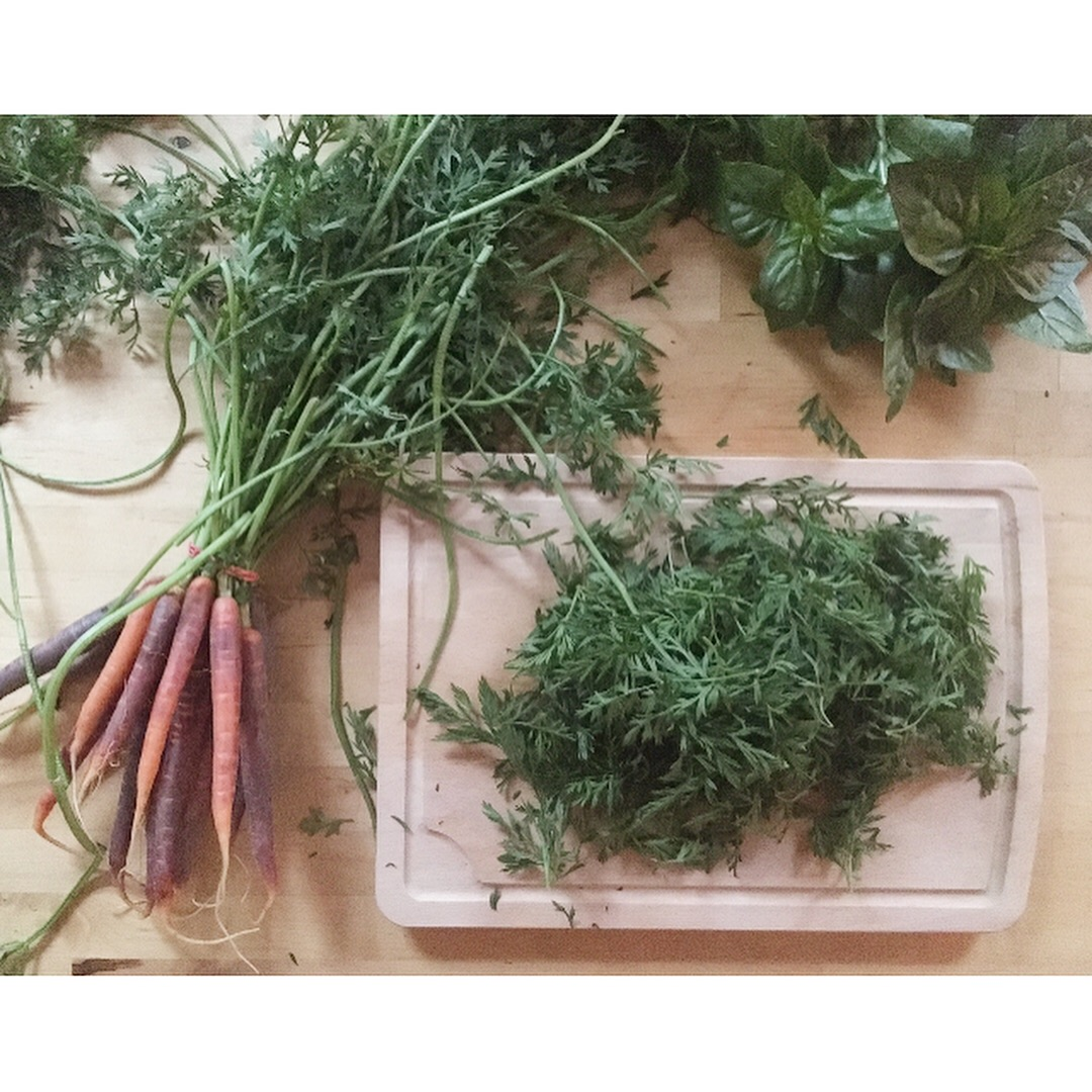 harvesting carrot tops, 100 days of pasta_