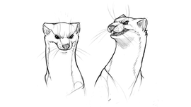Personnage animal - Expressions