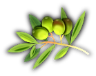 OLIVEs Droites (1).png
