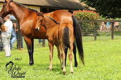 Mare, Falls For You, & colt