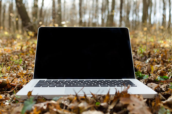 Canva - Working on Laptop in Forest.jpg