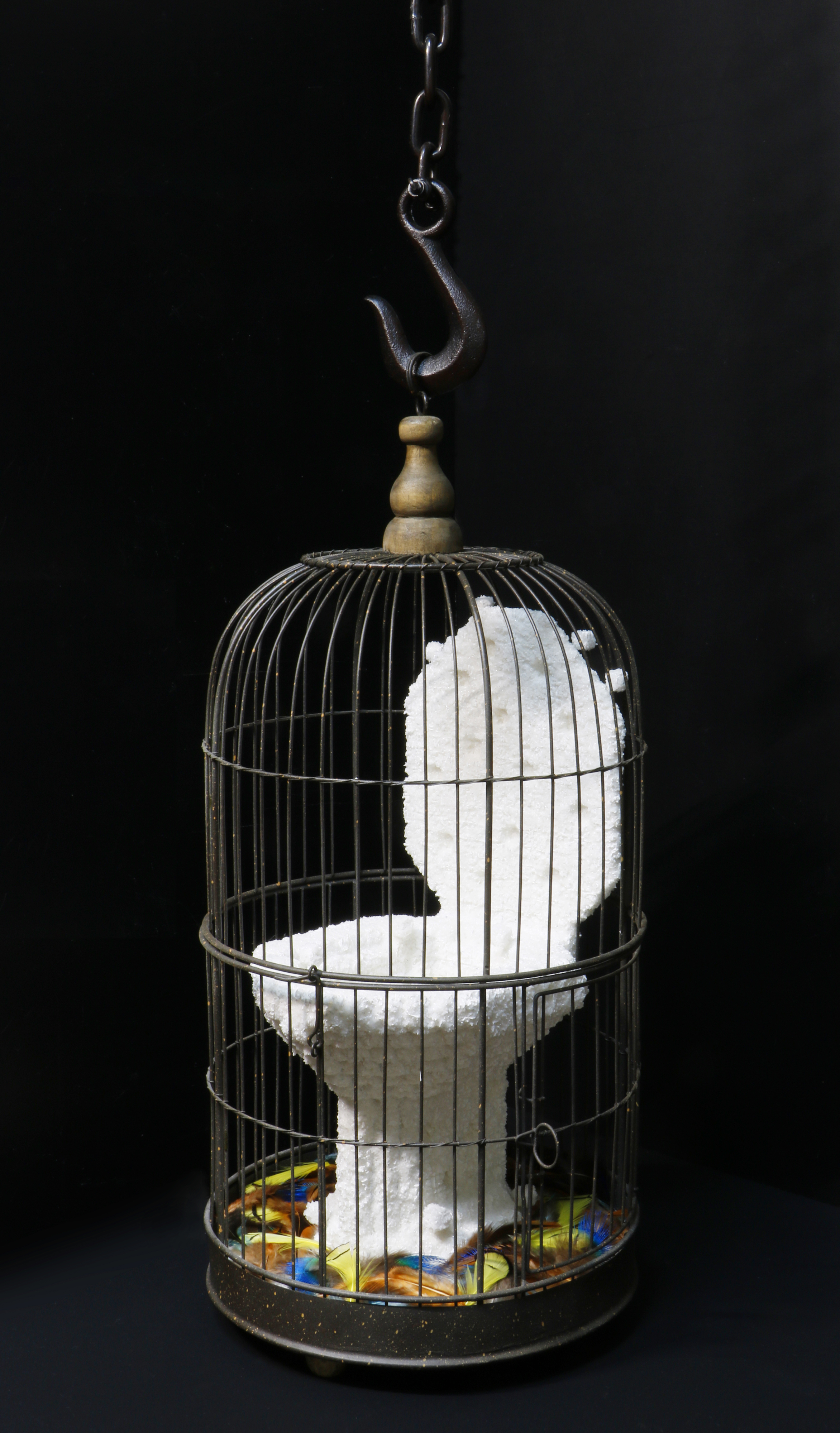Toilet & Birdcage