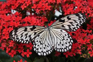 butterfly-1218884_1920.jpg