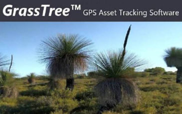 Grasstree Splash7.jpg