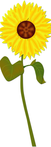 Sunflower.RGB.DS.C.png