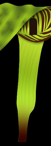 JacknThePulpit.RGB.DS.png