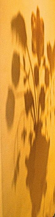 Flora Varietas.shadow.jpg