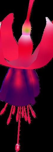 L.B.Fuchsia.RGB.DS.png