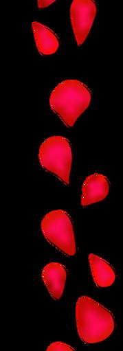 Rose Petals.RGB.DS.png