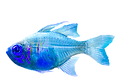 Fish12_edited.png