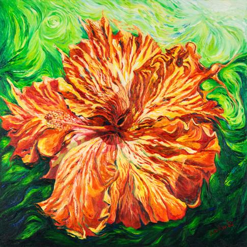 Flaming Hibiscus