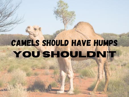 Camels Should Have Humps, You Shouldn't