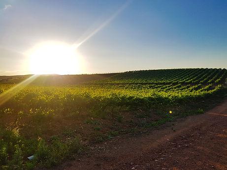 puesta de sol (1).jpg