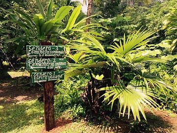 Im Dschungel von Costa Rica