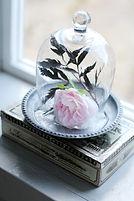 Rosa ros i glaskupa
