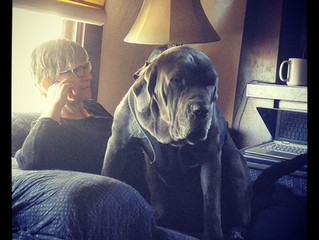 Writing with Mastiff in Lap = Not Writing
