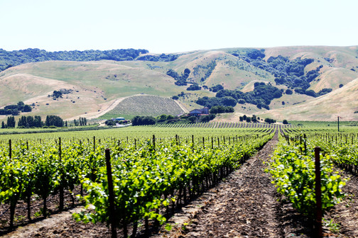 wine country. honestly forget where.