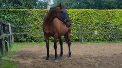 Ons paard Izo