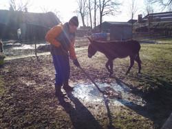 Aan het werk in de ezelwei