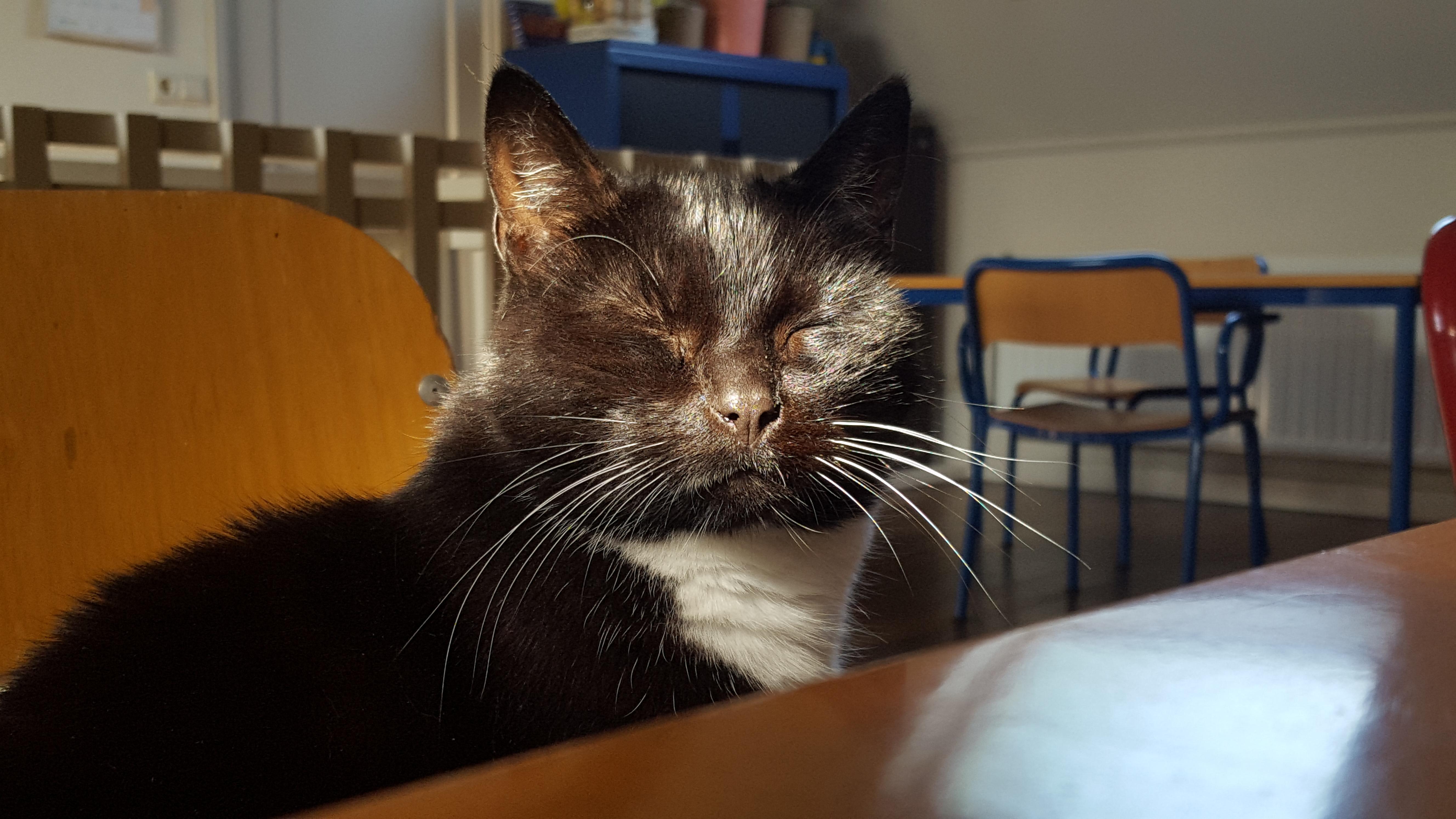Onze kat Twinkel