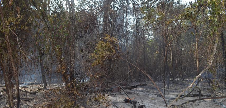 Além de extensa área de cana, incêndio atingiu vegetações nativas e sítios