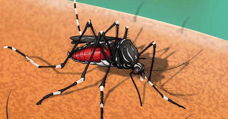 País registra aumento de casos e óbitos por dengue