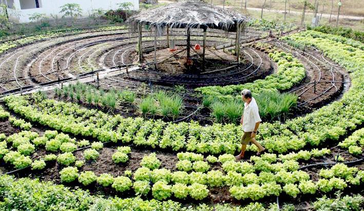 Agroecologia: alimentos saudáveis e preservação ambiental