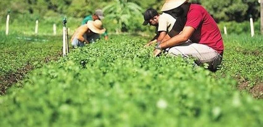 O impacto das formas de produção e distribuição dos alimentos