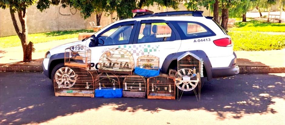 Operação em Motuca apreende pássaros silvestres em casa de moradores