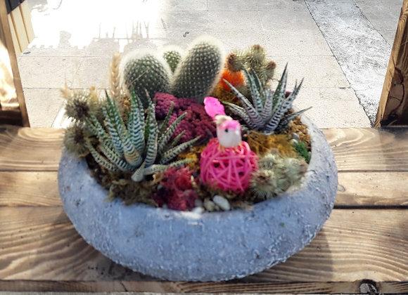 kaktus tasarım 3
