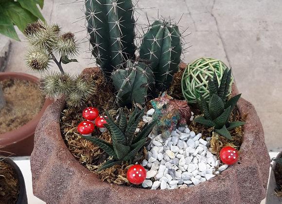 kaktus tasarım 2
