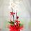 Thumbnail: çift dal ithal orkide