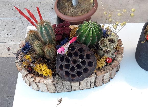 kaktus tasarım 1