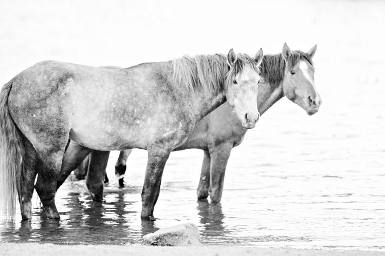 012_salt_river_wild_horses.jpg