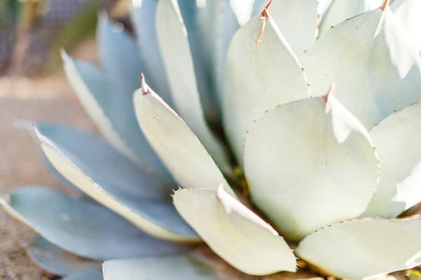 1_agave_cactus_serene_WEB.jpg