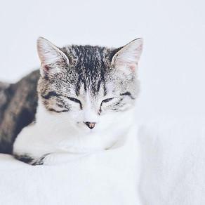Le chat zéro déchet